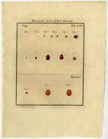 Antique Print-WATER-MITE-SPIDER-HYDRACHNIDIA-24/25-Rosel van Rosenhof-1765
