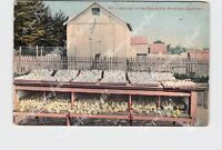 PPC POSTCARD CALIFORNIA PETALUMA BROODER ON CHICKEN RANCH