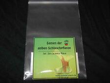 Fleischfressende Pflanzen 30 Sarracenia flava Samen! - Schlauchpflanze