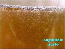 Inoculo / Starter Allevamento di Anguillole dell'aceto, mangime vivo per pesci