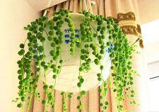 100 piezas perla rara Chlorophytum Perenne en Maceta Colgante Plantas Interiores succluent
