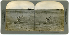 Stereo, Stereo Travel Co., Agriculture in the Roman Campagna, Italy Vintage ster