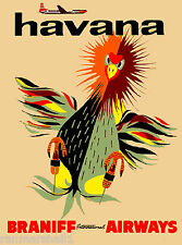 Havana Cuba Chicken Caribbean Island Vintage Travel Art Poster Advertisement