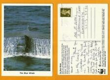 UK WWF  POSTCARD  STAMP THE BLUE  WHALE