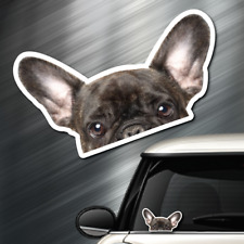 (1) French Bulldog DOG Peeper Sticker Window Peep Decal Car Auto Puppy AKC 3.5x6