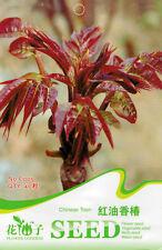1 Pack 40 Toon Seeds Chinese toon Toona Sinensis Organic C005