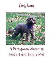 New Brigham: A Portuguese Waterdog That Did Not Like to Swim!