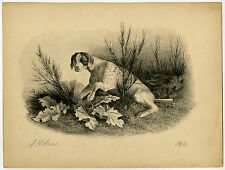 Antique Drawing-HUNTING DOG-POINTER-Stark-1894