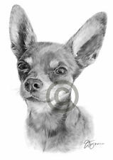 Dog CHIWAWA art pencil drawing print A4 / A3 signed by artist Pet Portrait