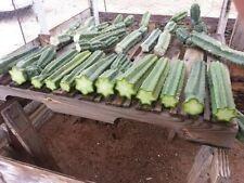 "cactus ""Echinopsis peruviana"" TORCIA PERUVIANA talea cm20 + manuale x coltivare"