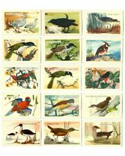 Vintage 1960s SHELL OIL Bird Series Discover Australia Trading Cards!