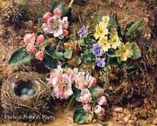 Birds Nest Apple Blossom Primrose by W H Hunt Art Country Garden 8x10 Print 0623