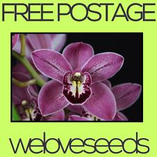 LOCAL AUSSIE STOCK - Purple Orchid, Cymbidium Flower Seeds ~10x FREE SHIP