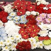 Christmas Special Offer - Flower Box £30.00 of flowers for £17.50