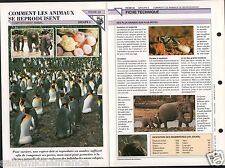 Reproduction Animals Eléphants Pingouins Souris Ours Baboins Mouse FICHE FRANCE