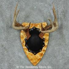 #13776 E | Whitetail Deer Antler Plaque Mount