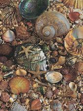 Beautiful Matted Seashells Foil Art Print~Affordable Art~Ocean Sea~8x10