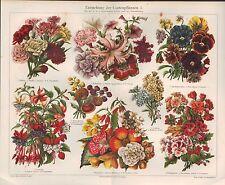Chromo-Lithografie 1908: Garten-Pflanzen. Nelken, Petunien, Stiefmütterchen,