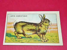 1920-1930 CHROMO GRANDE IMAGE ECOLE BON-POINT ANIMAUX LAPIN DOMESTIQUE