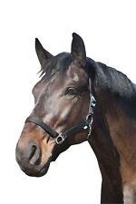 ELDORADO Halfter Standard - Noir - Pur-sang Licou de cheval pour les