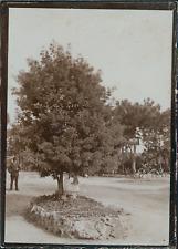France, Nice, Arbre dans un parc, ca.1900, Vintage citrate print Vintage citrate