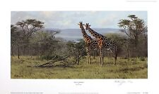 "ANTHONY GIBBS ""Two's Company"" giraffe africa SIGNED LTD SIZE:35cm x 59cm NEW"