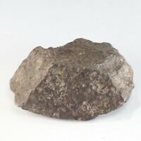 157g NWA 869 Brecciated Chondrite Meteorite A6114
