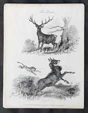 1834 Thomas Landseer Original Antique Print Of Orangutan Antiques