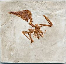 More details for well detailed small fossil bird