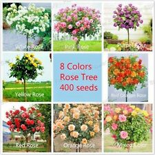400 Chinese Rose Tree Seeds, 8 Color Rose Tree, 50 pcs / Variety