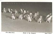 AUSTRALIA Victoria Philip Island. Parade of the Penguins
