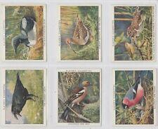 PLAYER'S SET:  WILD BIRDS   1934