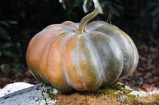 10 Seeds Fairytale Musque De Province Pumpkin Heirloom Big Beautiful
