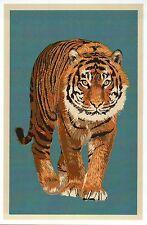 Bengal Tiger, Wildcat of Asia, India Bangladesh Nepal etc, Cat - Modern Postcard