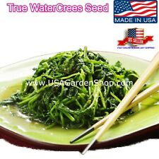 2500+ Seeds of Watercress Greens Aqua Seed Heirloom Organic Non-GMO Xa Lach Xoon