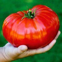 100x Big Red Giant Tomato Seeds Tasty Fleshy Organic Vegetables High Germination