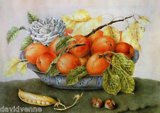 Apricots - Giovanna Garzoni 9x12inch image on Needlepoint Canvas ready to finish