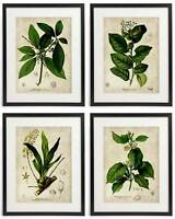 Vintage Botanical Floral No. 08 Art Home Wall Art Print Set of 4 Prints UNFRAMED