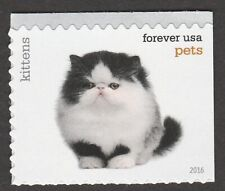 US 5111 Pets Kittens forever single MNH 2016