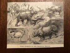 "Vintage Engraving Print of ASIAN ANIMALS Tiger Elephant Unframed 3"" x 4"""