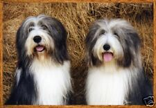 Bearded Collie A6 Blank Card Design No 10 By Starprint