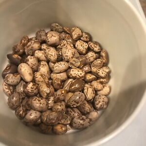 1 oz /approximately130 seeds Kentucky Striped BROWN Greasy Beans Heirloom Seeds