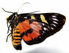 007 Mi : Moths: Moth species? 39.5mm A-