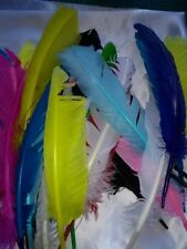 Quill feather SECONDS approx 10-12 in x 30