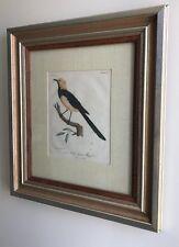 A Framed Antique Bird Print By Lebrecht Reinold