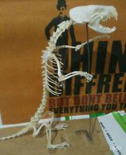 1Pcs Real mink Skull complete skeleton specimen