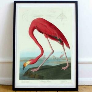 John Audubon Flamingo - Wall Art/Print/Poster