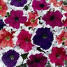 petunia seeds 50 pelleted frost mix seeds