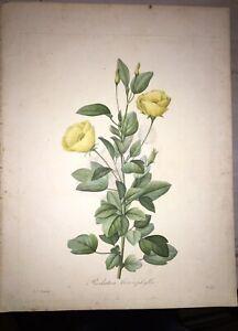 FLEUR DE REDOUTÉ - Redutea Heterophylla Gravure - Signée dans la planche - 1827