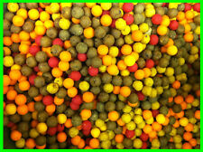 1000 x 10mm Boilies Mega Mix - Tutti / Scopex / Banana / Halibut / Anchovy